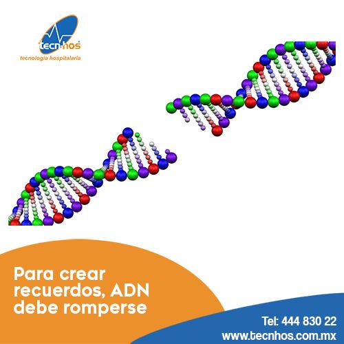 Para crear recuerdos, el ADN debe romperse